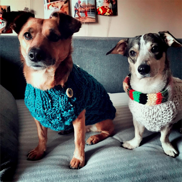 Sweterek dla psa SPLOT